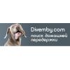 Divemby - сервис по передержке питомцев в домашних условиях